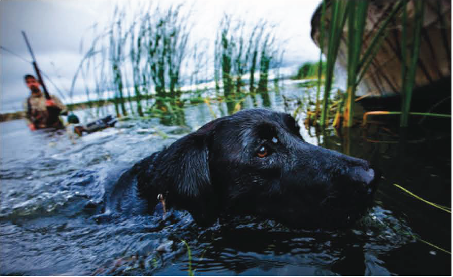 With this much retrieving to do, North Dakota might be a dog's favorite place to go for a swim.